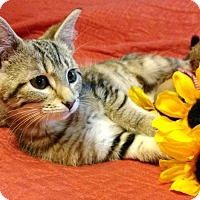 Adopt A Pet :: Mimi - Little Rock, AR