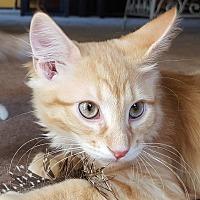 Adopt A Pet :: Zummara - Grayslake, IL