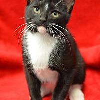 Adopt A Pet :: Owen171372 - Atlanta, GA