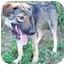 Photo 3 - German Shepherd Dog Mix Puppy for adoption in Waterbury, Connecticut - Sarah