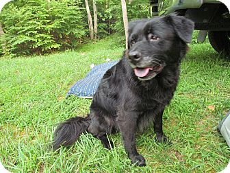 Labrador Retriever/Chow Chow Mix Dog for adoption in Richmond, Virginia - Rivannah