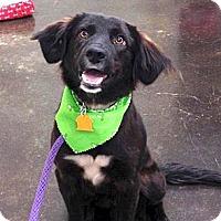 Adopt A Pet :: *Charlie - PENDING - Westport, CT