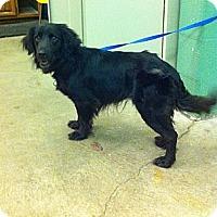 Adopt A Pet :: Percy - Peru, IN