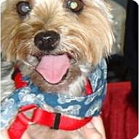 Adopt A Pet :: Cody - Tallahassee, FL