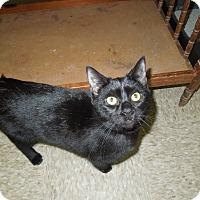 Adopt A Pet :: Kate - Medina, OH