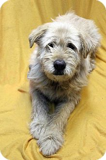 Terrier (Unknown Type, Medium) Mix Dog for adoption in Westminster, Colorado - Princess