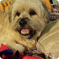 Adopt A Pet :: Bilbo - Hixson, TN