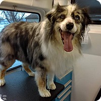 Adopt A Pet :: Ruby - Meridian, ID