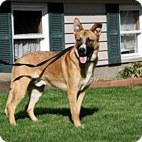 Adopt A Pet :: DOC COOPER - Sussex, NJ