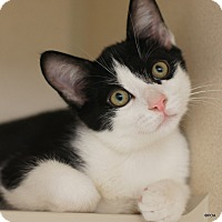 Adopt A Pet :: Eric - East Hartford, CT