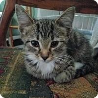 Adopt A Pet :: Eve - Brownsboro, AL