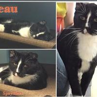 Adopt A Pet :: Beau - Metairie, LA
