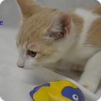 Adopt A Pet :: Dune - Miami Shores, FL