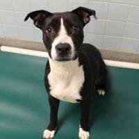 Adopt A Pet :: Lorna 6277 - Columbus, GA
