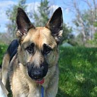 Adopt A Pet :: Kayson - Denver, CO