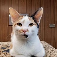 Adopt A Pet :: Kitten 15754 - Parlier, CA