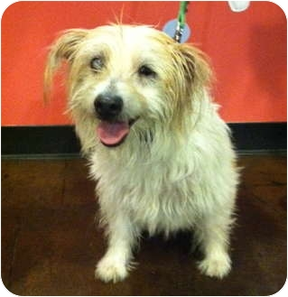 Terrier (Unknown Type, Medium) Mix Dog for adoption in Portland, Oregon - Truffles