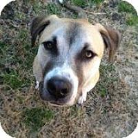 Adopt A Pet :: Jack Sparrow - Austin, TX