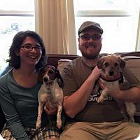 Adopt A Pet :: Gordon - Sacramento, CA