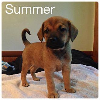 Carolina Dog/Shepherd (Unknown Type) Mix Puppy for adoption in Milton, New York - Summer