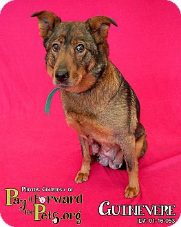 German Shepherd Dog Mix Dog for adoption in Sharon Center, Ohio - Guinevere