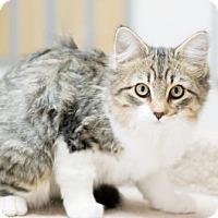 Adopt A Pet :: Lani - Fountain Hills, AZ