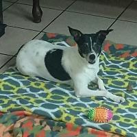 Adopt A Pet :: Rosie - Girard, GA