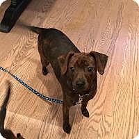 Adopt A Pet :: Linda - Parsippany, NJ