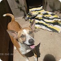 Adopt A Pet :: KAY-KAY - KELLYVILLE, OK
