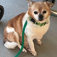 Adopt A Pet :: Lucky - New York, NY