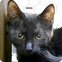 Adopt A Pet :: Winkin - Oskaloosa, IA