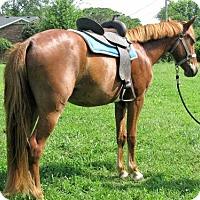 Adopt A Pet :: Flash - Gallatin, TN