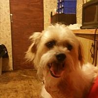 Adopt A Pet :: dewey - springtown, TX