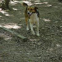 Adopt A Pet :: Jayer aka JJ - Albemarle, NC
