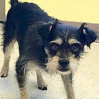 Adopt A Pet :: Forrest - Boulder, CO