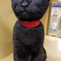 Adopt A Pet :: Misty - Lakeland, FL