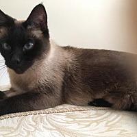 Adopt A Pet :: Keisha - Pinckney, MI