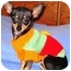 Photo 2 - Chihuahua Dog for adoption in Osseo, Minnesota - Princess