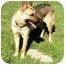 Photo 3 - German Shepherd Dog Dog for adoption in Houston, Texas - Thumper