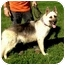 Photo 1 - German Shepherd Dog Dog for adoption in Fort Worth, Texas - JASON - ADOPTION PENDING