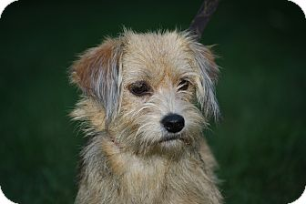 Terrier (Unknown Type, Small) Mix Dog for adoption in West Milford, New Jersey - TERRI - HOLD