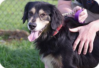Retriever (Unknown Type)/Spaniel (Unknown Type) Mix Dog for adoption in Elyria, Ohio - Buddy