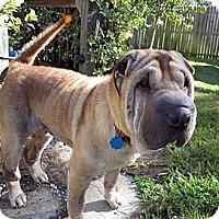 Adopt A Pet :: Ella - Gainesville, FL