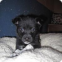 Adopt A Pet :: Madison - Westbank, BC