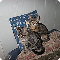Adopt A Pet :: Aurora & Bridget - Portland, ME