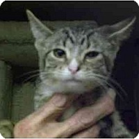 Adopt A Pet :: Holly - Lombard, IL