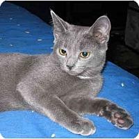 Adopt A Pet :: Felicia kitten - LUVbug - Cincinnati, OH