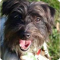 Adopt A Pet :: Phoenix - Toronto/Etobicoke/GTA, ON