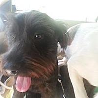 Adopt A Pet :: Jocque - San Antonio, TX