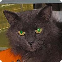 Adopt A Pet :: Gracie - Walden, NY